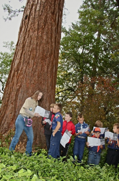 Cub Scouts learning about Oregon's oldest Sequoia - The Britt Sequoia - an Oregon Heritage Tree - planted 1862. Photo by Larry B. Smith.