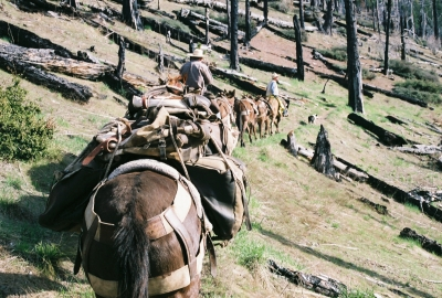 Ohlone Riders Unit heading thru burn area. Photo by Julie Green.