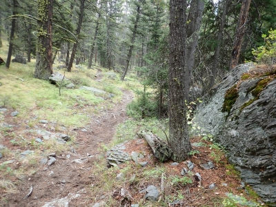 Looking down the trail about halfway up to Bear Valley Lake. Photo by David Lingle.