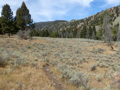 Near the Lower Trailhead, the trail runs through open sage meadows. Photo by David Lingle.