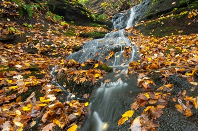 A lively woodland brook cascades through a gorge blanketed with autumn leaves. Photo by Justin Coleman.