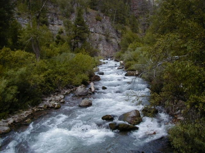 Palisades Creek shown from a bridge crossing. Photo by USDA Forest Service Staff.