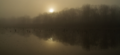 Cold fog over the marsh. Photo by Stan Malcolm.