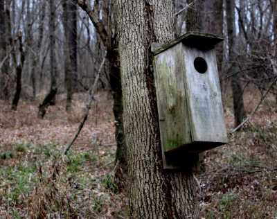 Wood Duck nesting box. Photo by Jonathan Voelz.