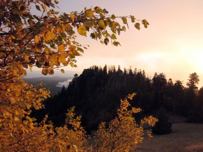 Evening light on the Aspens. Photo by USFS, SW Region, Kaibab NF.
