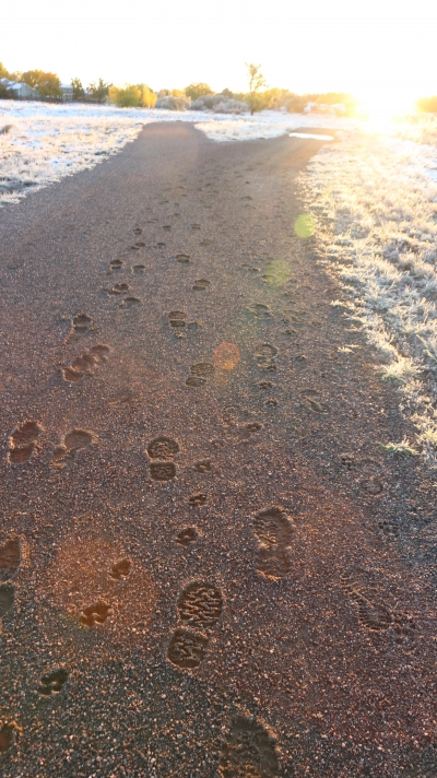 The muddy trail froze into perfect casts of their tracks, leaving a small story behind, open for the mind's interpretation. Photo by Hans T. Reichgelt.