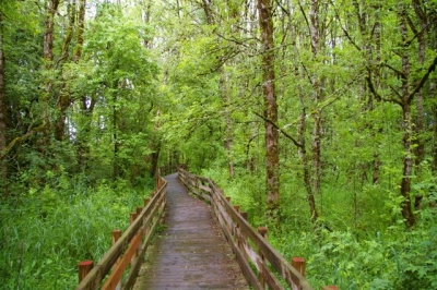 Boardwalk section of rail-trail. Courtesy of Trailkeepers of Oregon. Photo by John Sparks.