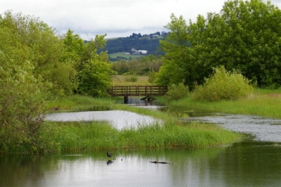 View over Kingfisher Marsh from the boardwalk. Courtesy of Trailkeepers of Oregon. Photo by John Sparks.
