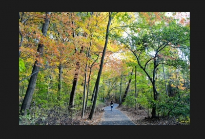 Fall foliage at Cunningham Park. Photo by NYC Parks.