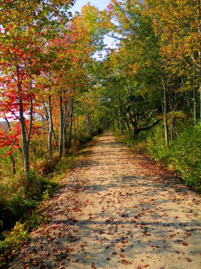 A fall trail beckons at Rachel Carson National Wildlife Refuge in Maine. Photo by USFWS.
