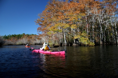 Paddling past golden Cypress on Graham Creek. Photo by Doug Alderson.