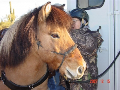 Volunteer saddles up a horse for packing tools, coolers, and people 4 miles to trail project site. Photo by Rich Hanson.