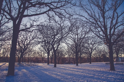 Park in winter. Photo by Tony Webster/wiki.