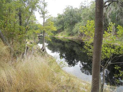 Suwannee River Overlook