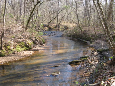 Flowing Coon Creek