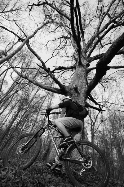 Big Oak Bike Rider