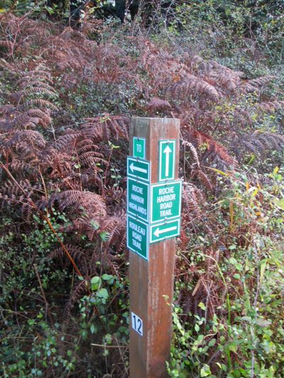 Woodland trail sign by SW corner.