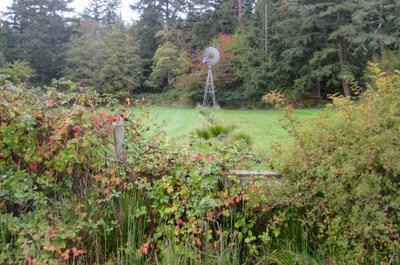 Windmill on Roche Harbor property by trail
