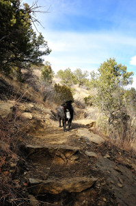 Trail Photo with dog