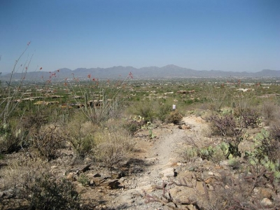 Tucson from the Pima Canyon Trail near the trailhead. Photo by Djmascheck.