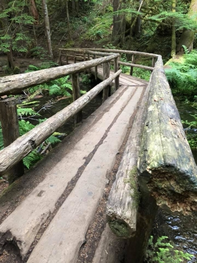 Wood bridge on trail. Photo by Gabrielle Webster.