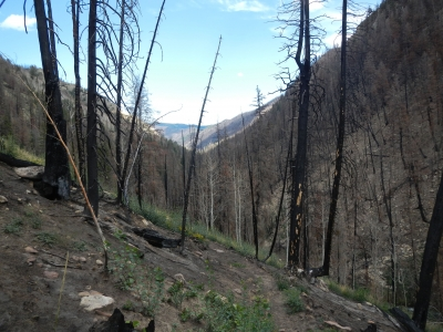 Left Fork Hungtington Creek Seely Fire burn area.