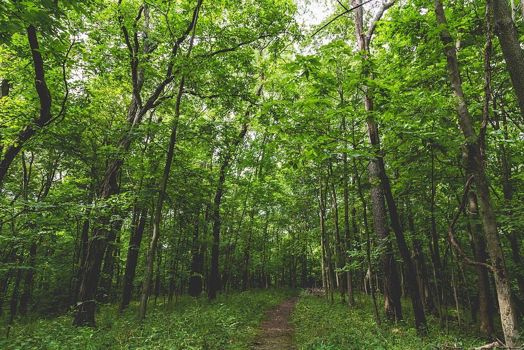 photo: The Cedar Valley Nature Trail hiking trail at Sugar Bottom Recreation Area and campground near North Liberty, Iowa. Photo by Tony Webster.