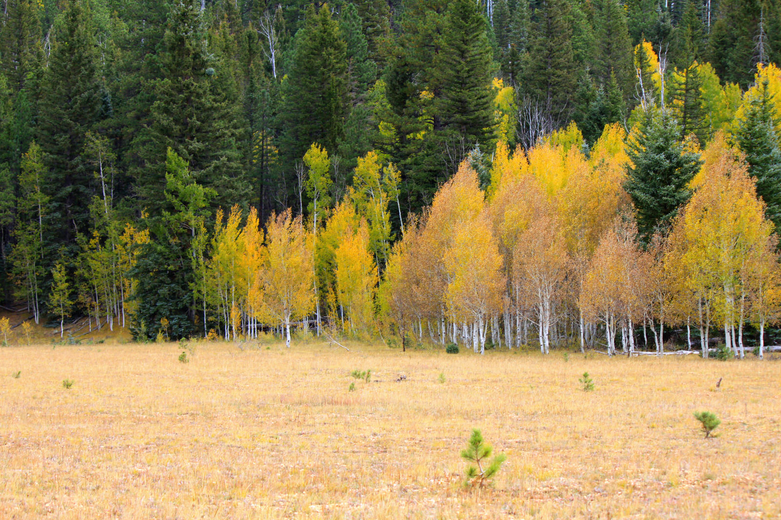 photo: Fall colors on the Kaibab National Forest. Photo by U.S. Forest Service, Southwest.