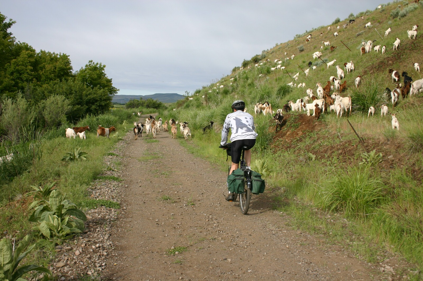 photo: Goat crossing. Photo by Friends of the Weiser River Tr.