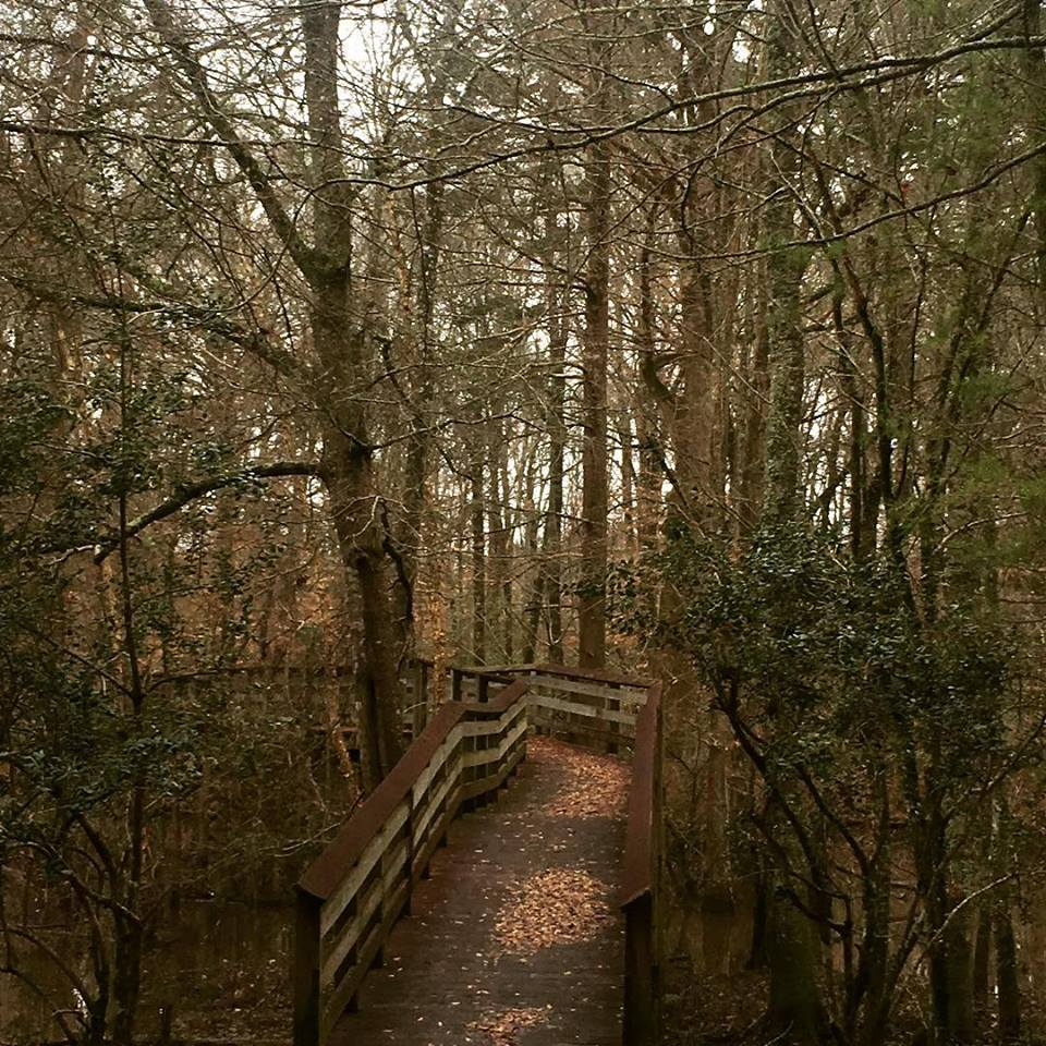photo: The nature trail is a nice walk through the woods. Photo by Mississippi Sought.