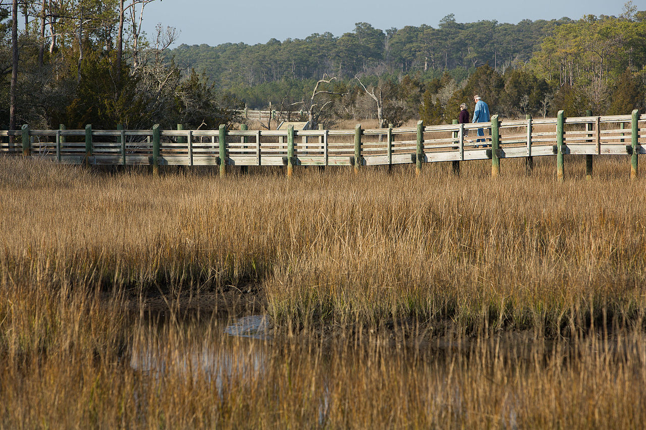 photo: Tideland Trail at Cedar Point Recreation Area in the Croatan National Forest, North Carolina. Photo by USFS.